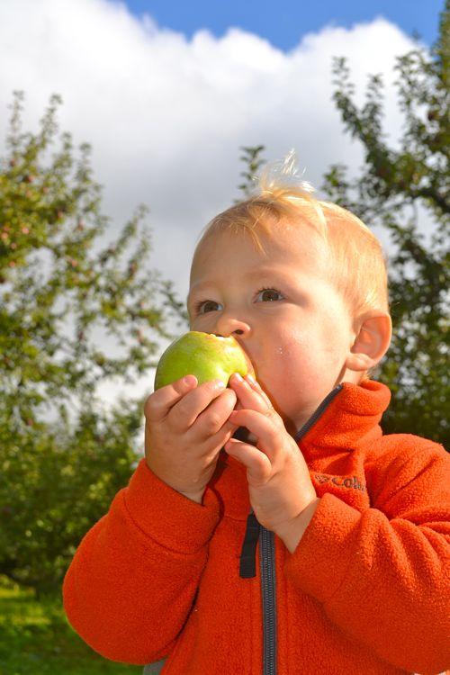 applepick.jpg