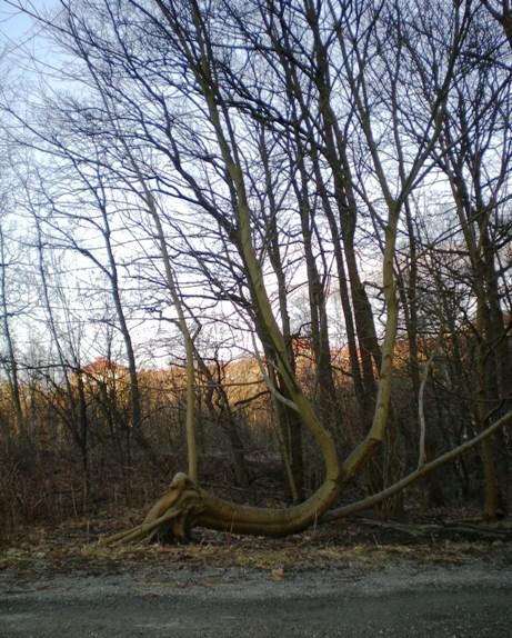 bend_tree.jpg