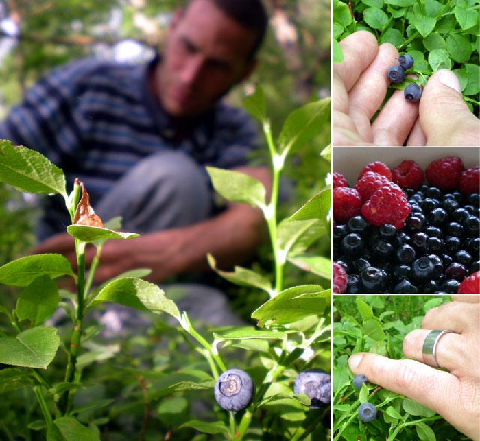 berries2009.jpg