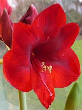 blommor2.JPG