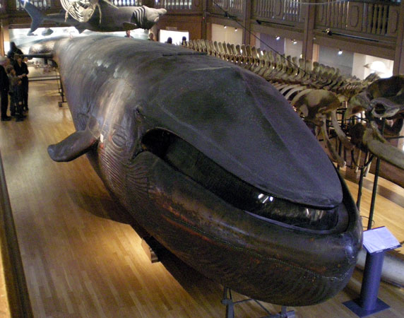 bluewhale.jpg