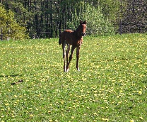 little_horse.jpg