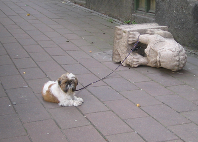 strong_dog.jpg